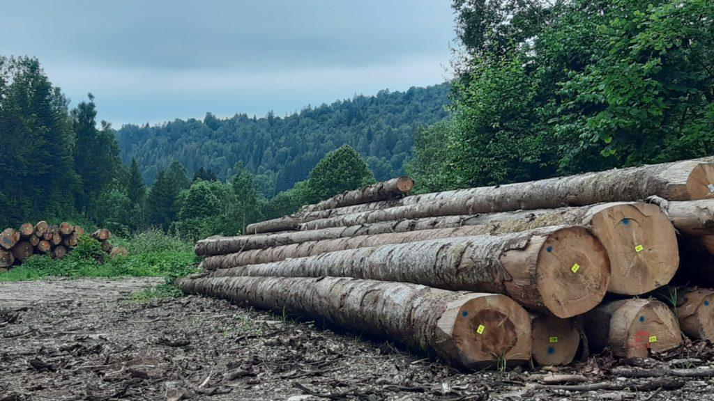 arbres jura