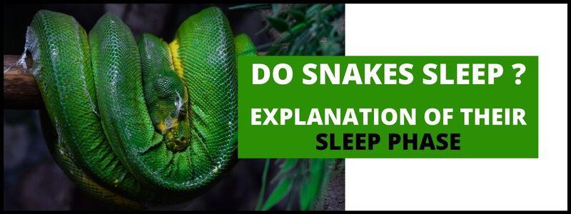 Do Snakes Sleep