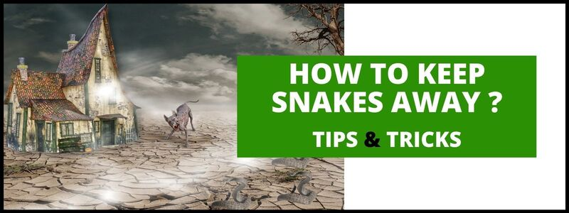 How To Keep Snakes Away ?
