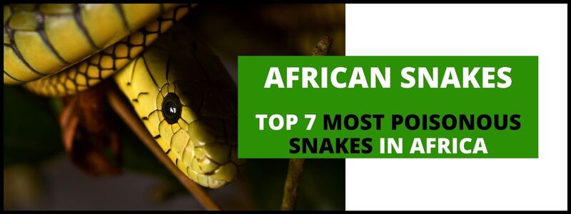 7 Most Poisonous Snakes in Africa