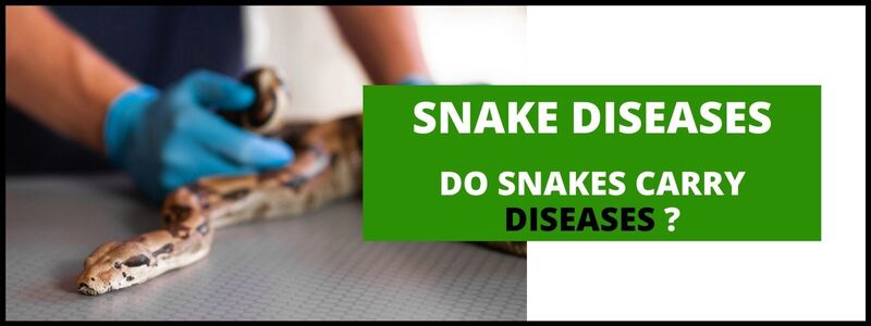 do-snakes-carry-dieases