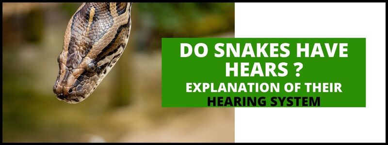 Do Snakes Have Ears