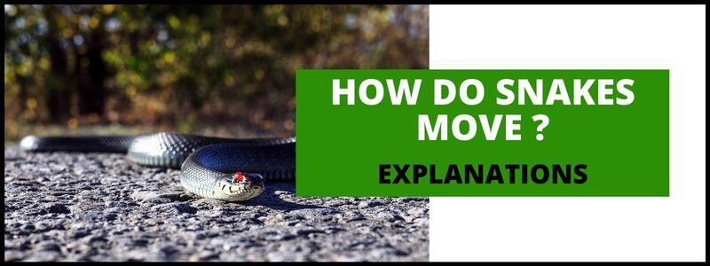how-do-snakes-move