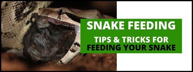 Snake Feeding Banner