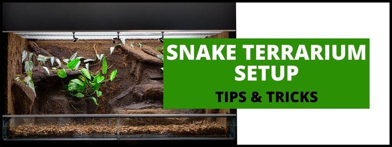 Snake Terrarium Setup