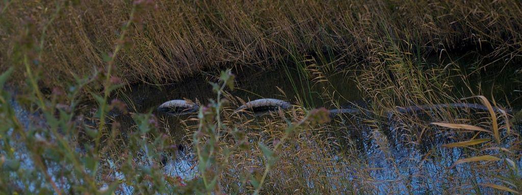 Green Anaconda Water