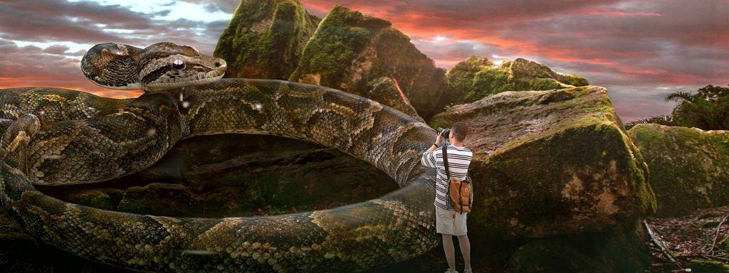 Big Snake in Dream Islam