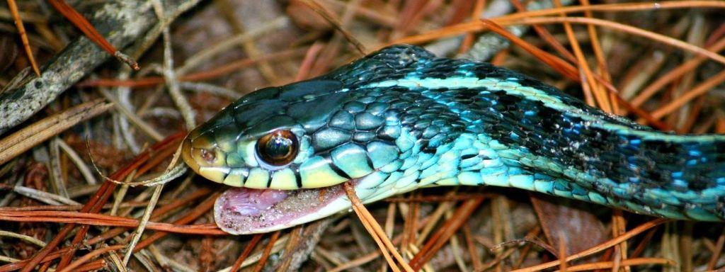 Blue Snake in Dream Islam