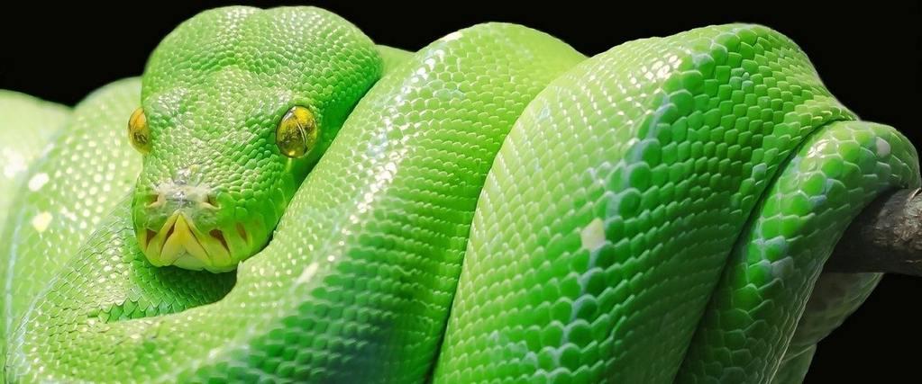 Coiled Snake in Dream Islam