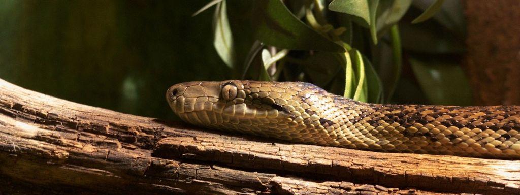 Creeping Snake