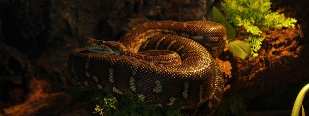 Green Anaconda Prey