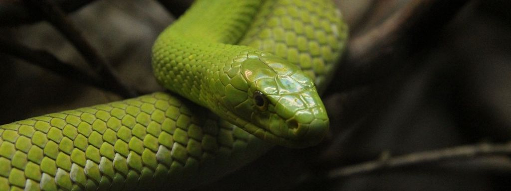 Green Mamba Serpent