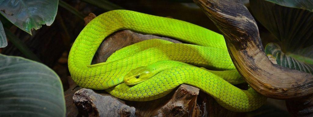 Green Snake in Dream Islam