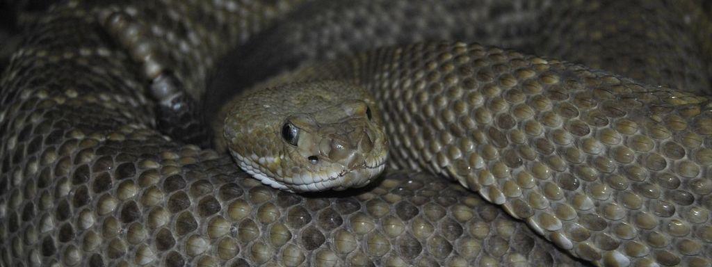 Grey Snake in Dream Islam