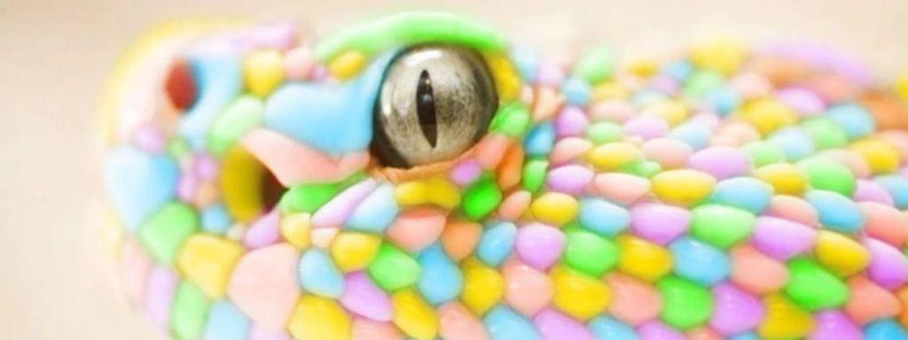 Multicolored Snake