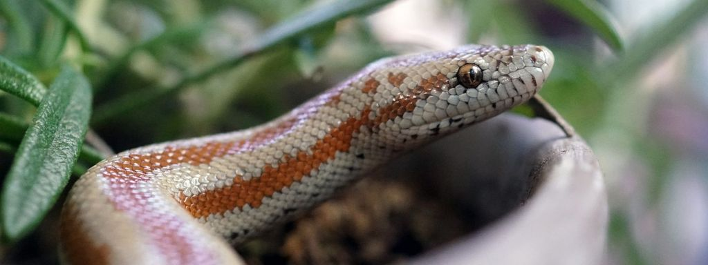 Pet Snake Home