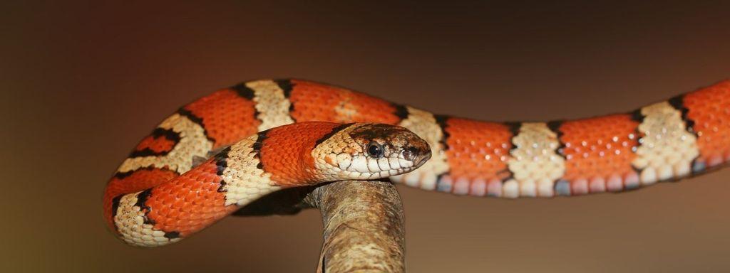 Small Snake