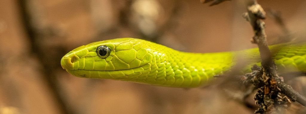 Snake Hearing System
