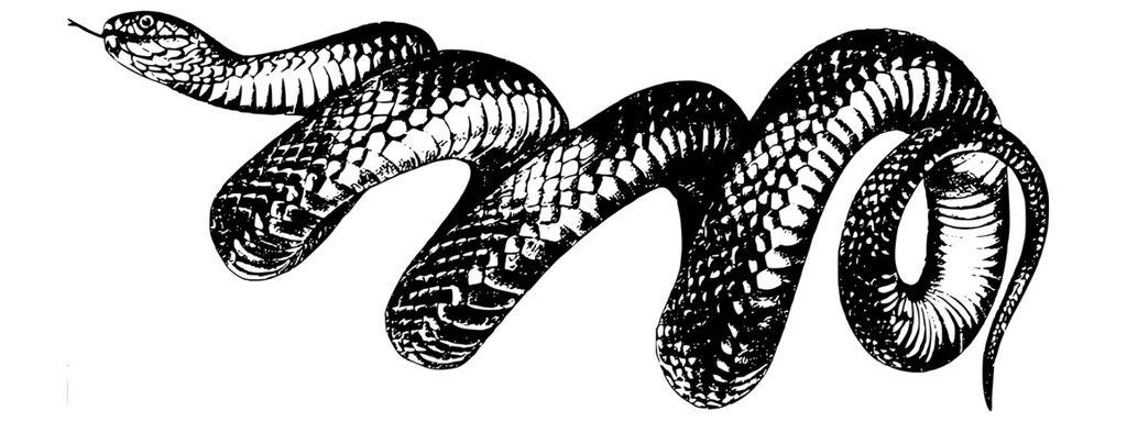 Snake Movement