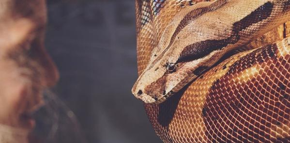 Snake Dream Picture 1
