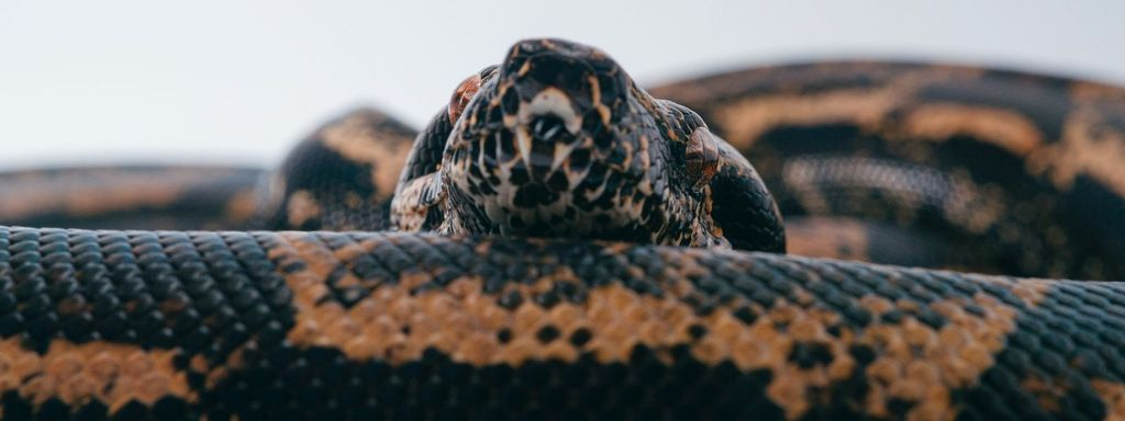Snake Respiratory System