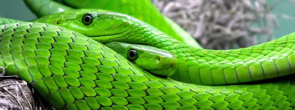 Snake Species