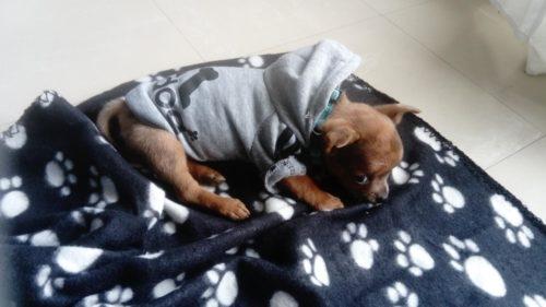 Adidog - Vêtements pour Animaux à Capuche photo review