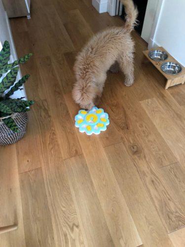 ADOGO Mangeoire pour chien avec distributeur de friandises photo review
