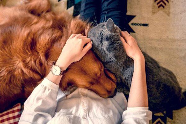 1 fd0dbc9e ce9a 4e00 b89c 2deb40c70416 Brosse Anti-Poil - Recommandée Par Les Vétérinaires