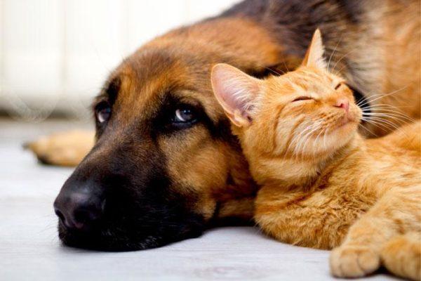 2 2213f137 2d01 4bb7 b96a b507004e3265 Brosse Anti-Poil - Recommandée Par Les Vétérinaires