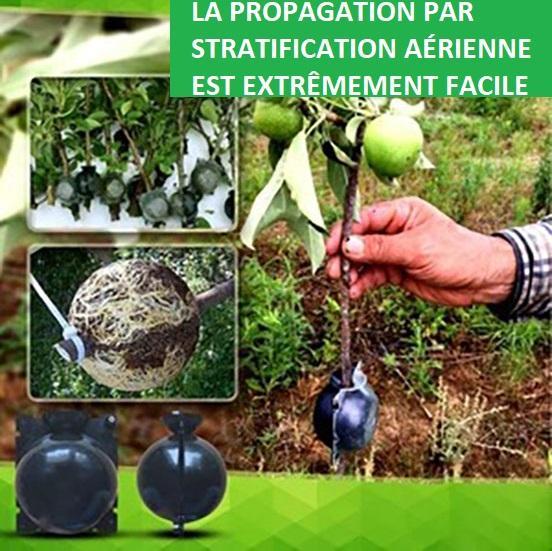 P10 bd8d5d6f f92a 47de ad49 382070717807 Dispositif De Greffage Des Plantes