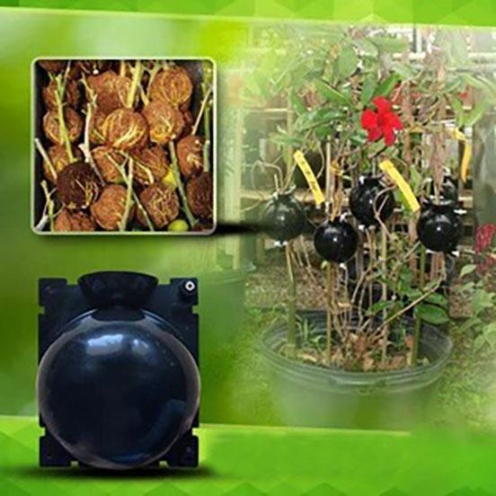 P1copy 1 Dispositif De Greffage Des Plantes
