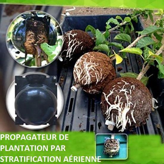 P5copy Dispositif De Greffage Des Plantes
