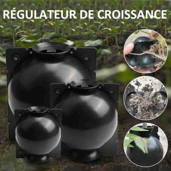P7copy Dispositif De Greffage Des Plantes