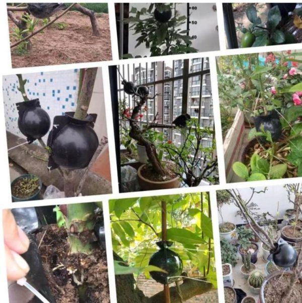 Screenshot 6 12ca1992 c923 4530 8887 633e0e98a55b Dispositif De Greffage Des Plantes