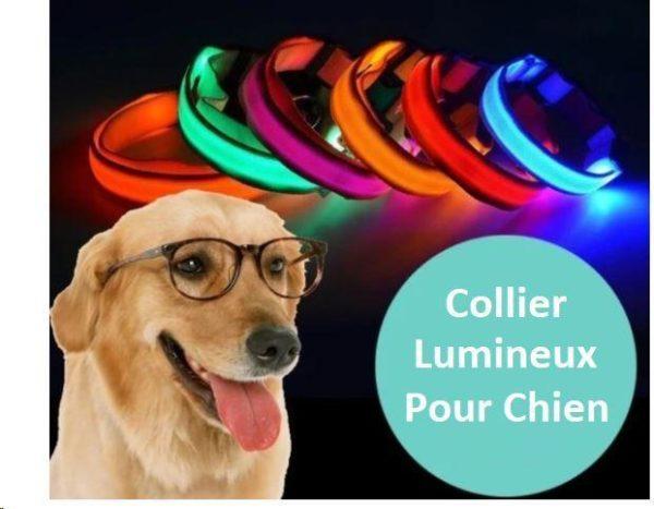 chien 30df9786 f6f3 40d5 8f5a cad45cf731c4 Collier Lumineux Pour Chien