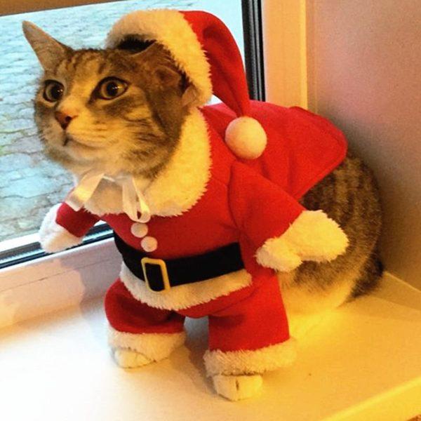 costumedenoelpourchat Déguisement De Noël Pour Chats Et Chiens