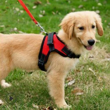 harnais pour chien Harnais Easy-Clip Pour Chien | Animal Protect®
