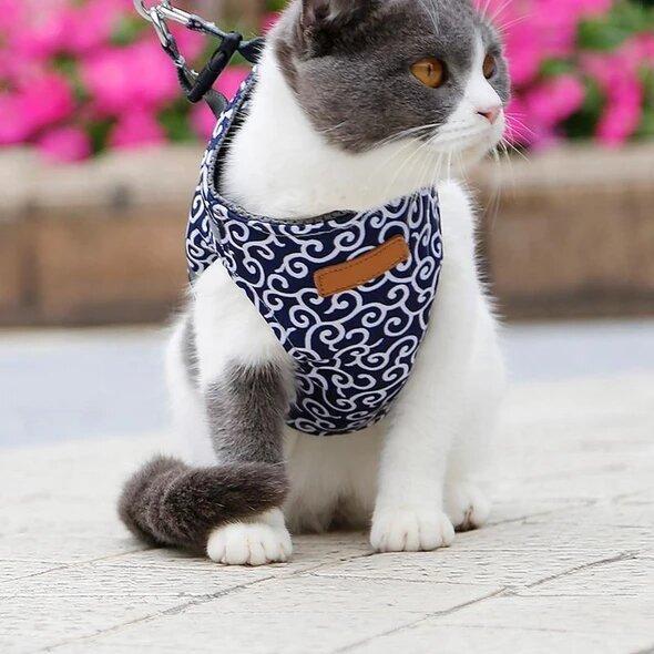 harnaispourchaton Nouveau : Le Meilleur Moyen De Protéger Votre Chat Lorsque Vous Sortez