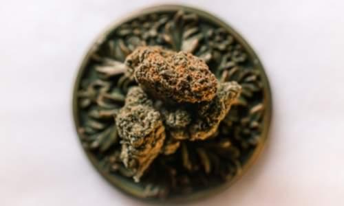 Les racines du cannabis en Jamaique Lhistoire de la ganja sur lile Quelle est la signification du lion et du cannabis dans la culture rastafari rastafarishop.fr