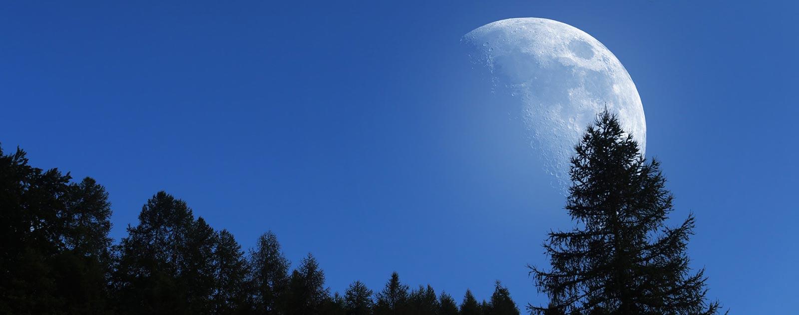 fondu de lune en forêt