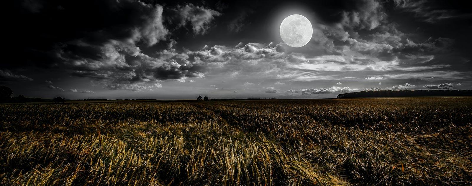 lune blanche dans un champ