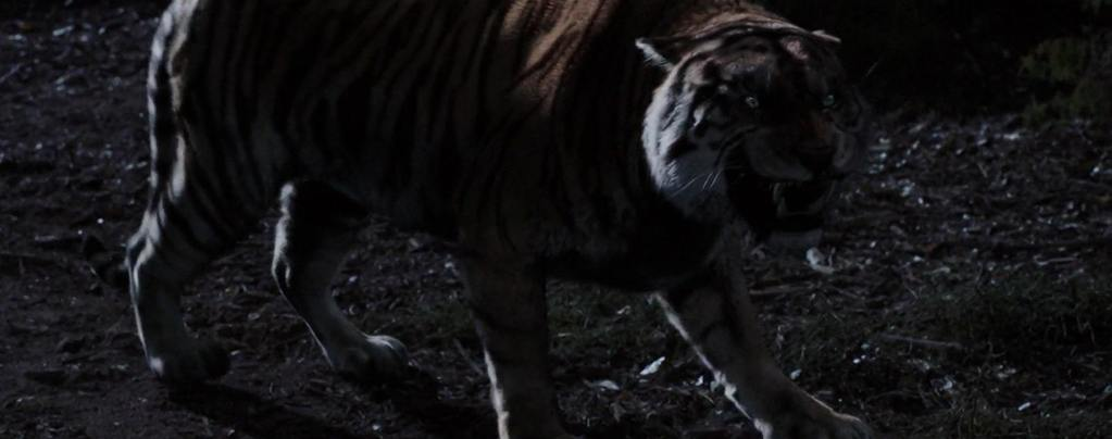 tigre de java roi de la foret