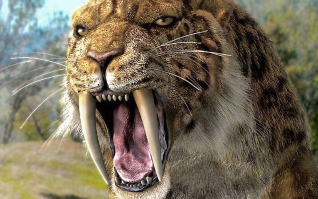 smilodon tigre à dents de sabre