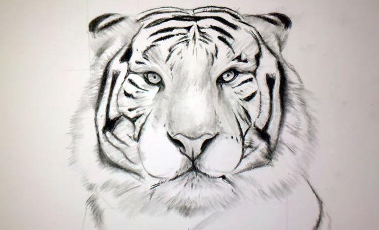 Comment dessiner un tigre !