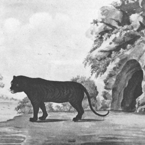 tableau tigre noir