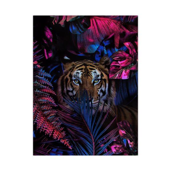 poster tigre Caché