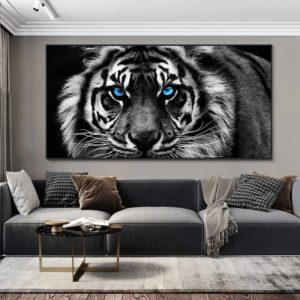 poster tigre Yeux Bleus