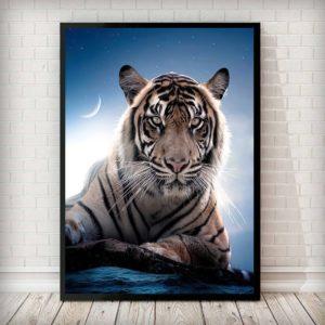 poster tigre Clair de Lune