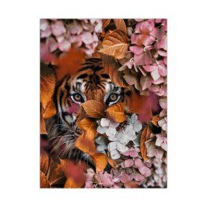 poster tigre Regard Curieux